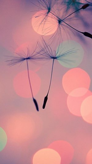 dandelion-wallpaper-59